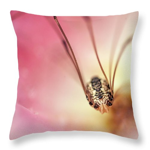 Daddy Longlegs Spider Throw Pillow featuring the photograph Daddy Longlegs Spider by Trevor Slauenwhite