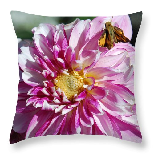 Dahlia Throw Pillow featuring the photograph Dahlia Days by Suzanne Gaff