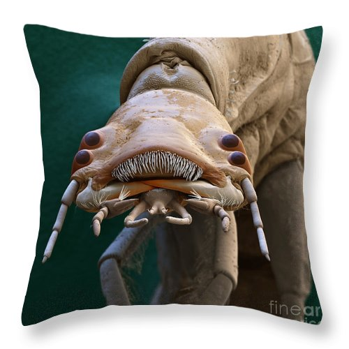 Animal Throw Pillow featuring the photograph Diving Beetle Larva by Eye of Science
