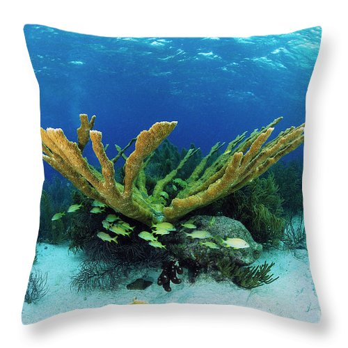 70007084 Throw Pillow featuring the photograph Elkhorn Coral by Hans Leijnse