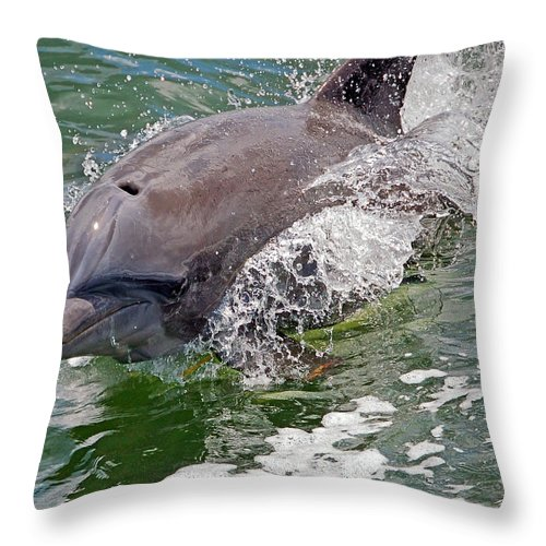 Dolphin Throw Pillow featuring the photograph Endurance by Donna Proctor