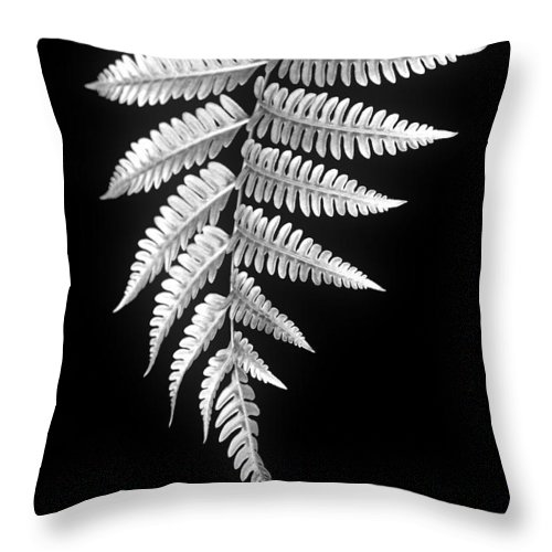 Australia; Floral Throw Pillow featuring the photograph Fern Dance by Holly Kempe