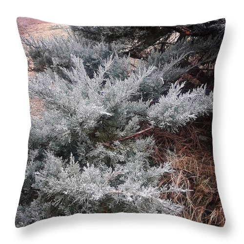 Scenery Throw Pillow featuring the photograph First Frost by Ariana Torralba