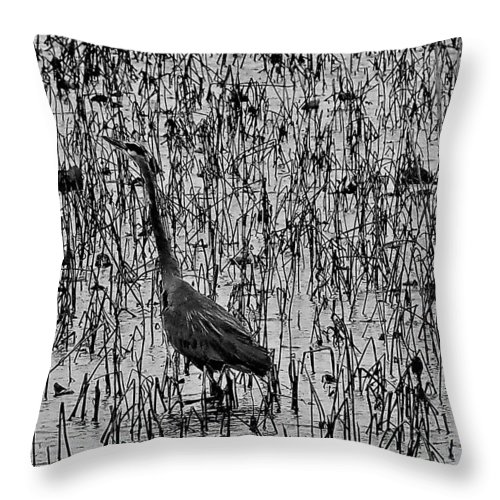Great Blue Heron Throw Pillow featuring the photograph Great Blue Heron Black And White by Jerry Connally