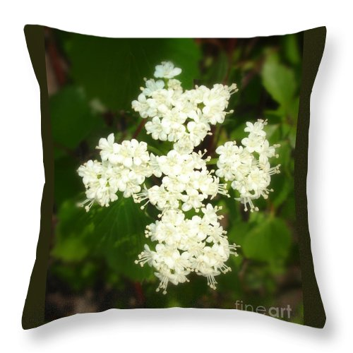 Photography Throw Pillow featuring the photograph Guardian Of The Garden by Shelley Jones