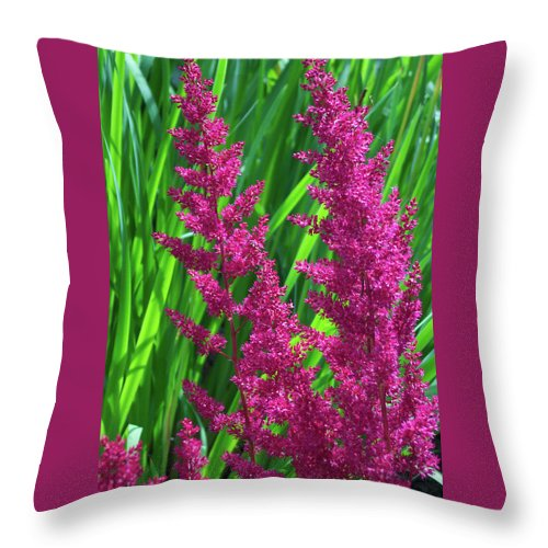 Ellie Astilbe Throw Pillow featuring the photograph Hot Pink Ellie Astilbe Flowers by Trevor Slauenwhite