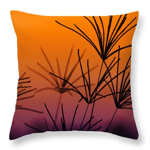 Nature Throw Pillow featuring the photograph I Love a Sunburnt Country by Holly Kempe