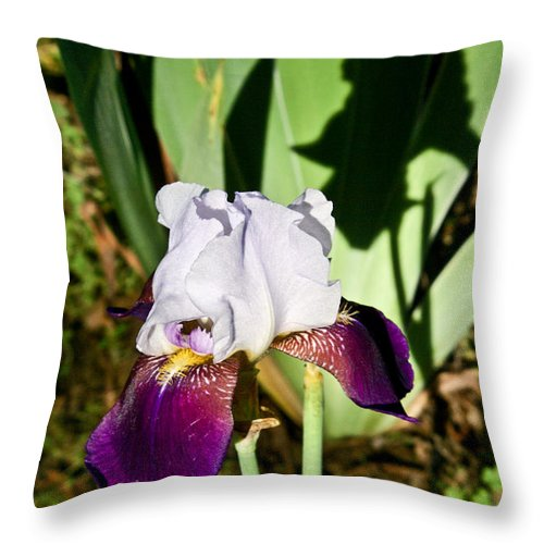 Iris Throw Pillow featuring the photograph Iris and Shadow by Douglas Barnett