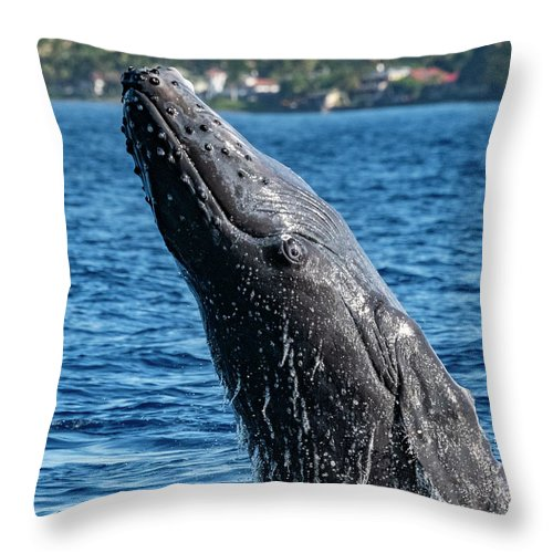 00595515 Throw Pillow featuring the photograph Juvenlie Humpback Breaching by Flip Nicklin