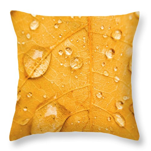 Water Throw Pillow featuring the photograph Leafy Tropics by Jorgo Photography - Wall Art Gallery