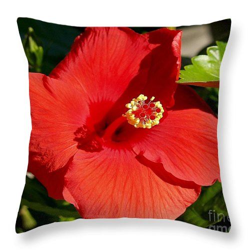 Fine Art Photography Throw Pillow featuring the photograph Leila by Patricia Griffin Brett