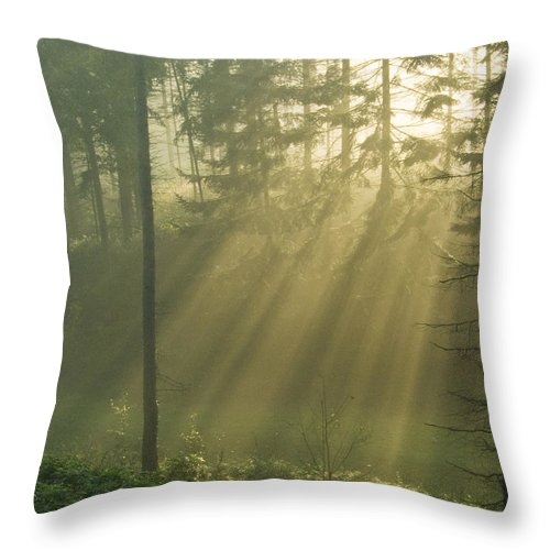 Nature Throw Pillow featuring the photograph Light from Heaven by Daniel Csoka