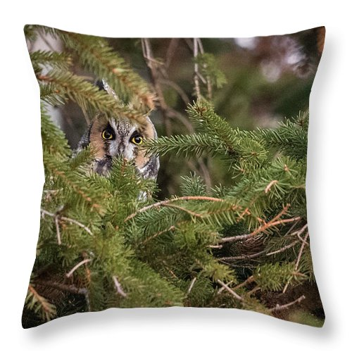 Long-eared Owl Throw Pillow featuring the photograph Long-eared Owl Hideaway I by Everet Regal