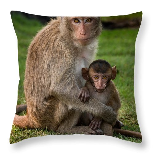 3scape Throw Pillow featuring the photograph Macaque Monkey Family by Adam Romanowicz
