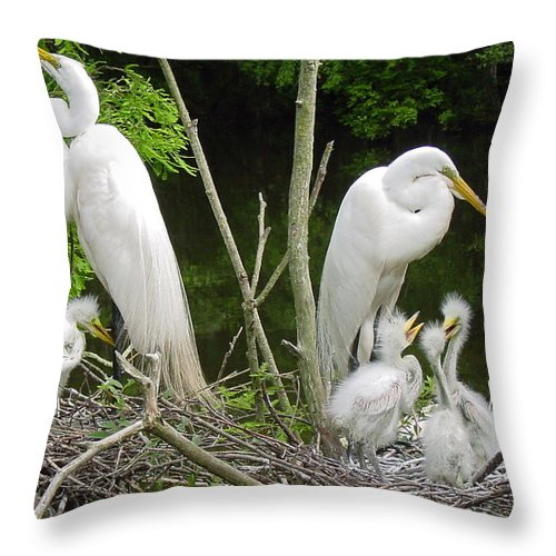 Great White Egret Throw Pillow featuring the photograph Mom n Pop n Chicks by Suzanne Gaff
