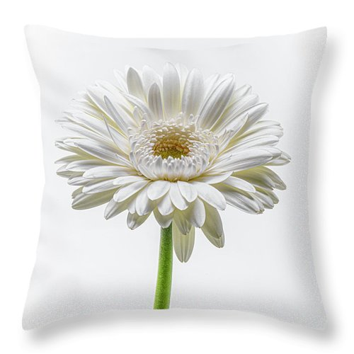 One White Daisy Throw Pillow For Sale By Sandi Kroll