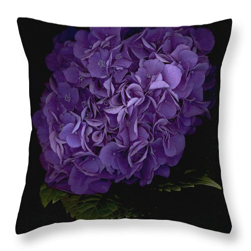 Hydrangea Throw Pillow featuring the photograph Out Of The Shadows by Suzanne Gaff