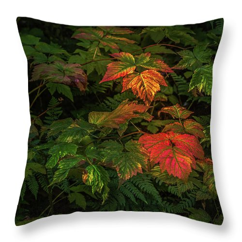 Fall In Love Throw Pillow featuring the photograph Painted Leaves by Lu Ross