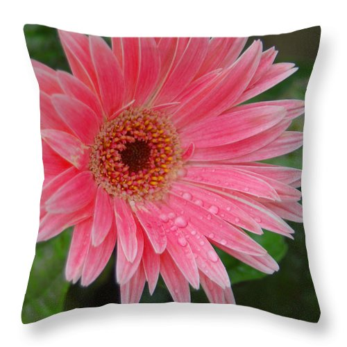 Pink Gerbera Throw Pillow featuring the photograph Pink Gerbera by Suzanne Gaff