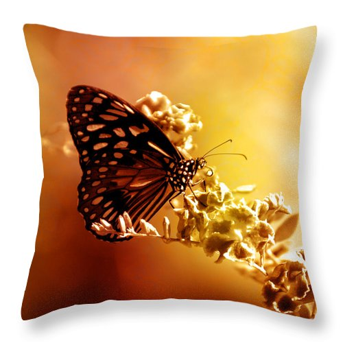 Butterfly Throw Pillow featuring the photograph Radiance by Holly Kempe