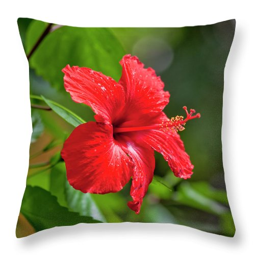 Hibiscus Throw Pillow featuring the photograph Red Hibiscus Rosemallow by Trevor Slauenwhite