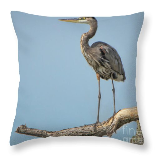 Heron Throw Pillow featuring the photograph Roosting Heron by Gaby Swanson