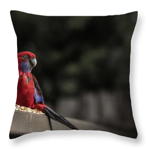 Rosella Throw Pillow featuring the photograph Rosella 1 by Leigh Henningham