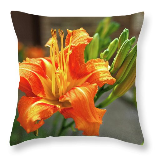 Orange Throw Pillow featuring the photograph Spring Flower 14 by C Winslow Shafer