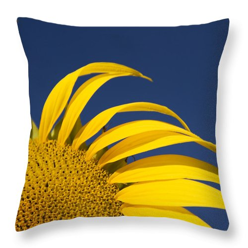 3scape Throw Pillow featuring the photograph Sunflower by Adam Romanowicz