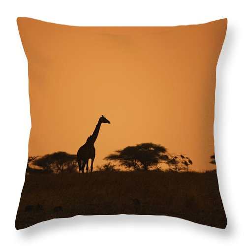 3scape Throw Pillow featuring the photograph Sunset Over Tarangire by Adam Romanowicz