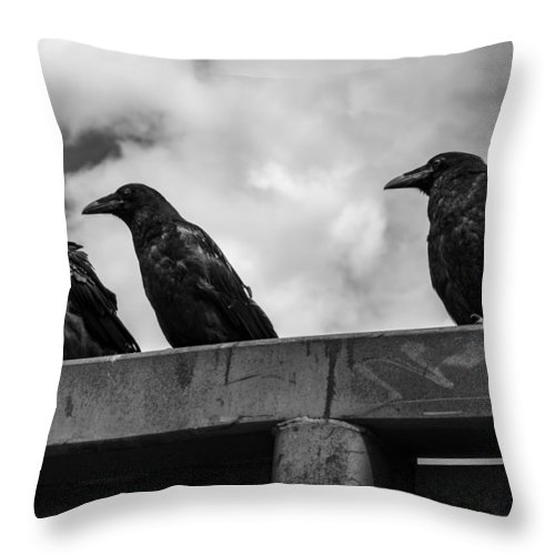 Three Throw Pillow featuring the photograph Three Crows 2 by Damon Dulewich