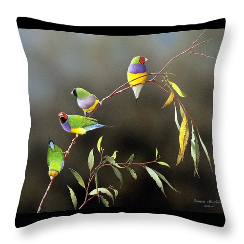Bird Throw Pillow featuring the painting Three Guys For Every Girl - Gouldian Finches by Frances McMahon