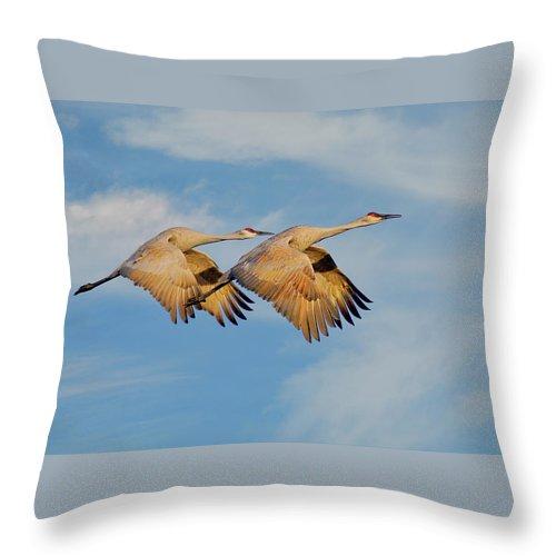 Sandhill Cranes Throw Pillow featuring the photograph Unison in Flight-Sandhill Cranes by Zayne Diamond Photographic