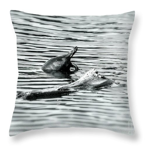 Painted Turtle Throw Pillow featuring the photograph Up I Go by Randy J Heath