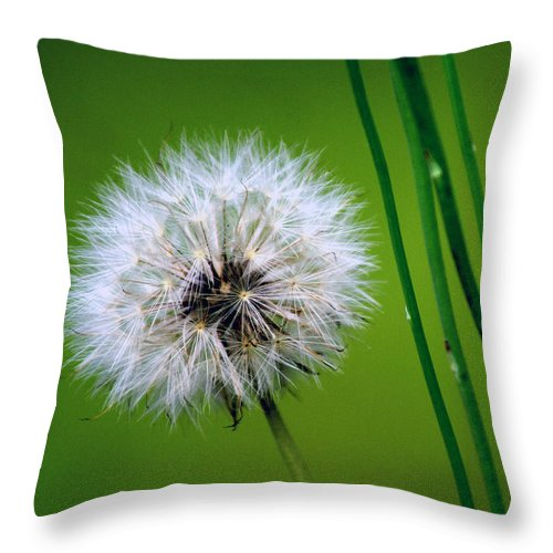 Dandelion Throw Pillow featuring the photograph Waiting for the Winds of Deliverance by Holly Kempe