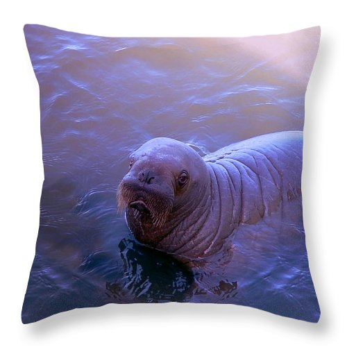 Walrus Throw Pillow featuring the photograph Walrus Calve - Paintography by Anthony Jones