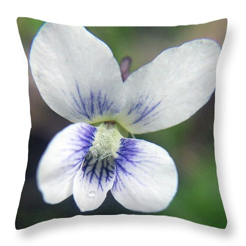 Nature Throw Pillow featuring the photograph White And Blue by Holly Morris