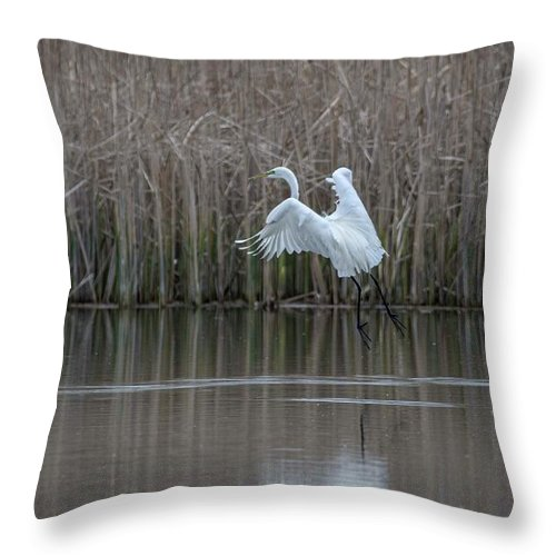 White Egret Throw Pillow featuring the photograph White Egret - 2 by David Bearden
