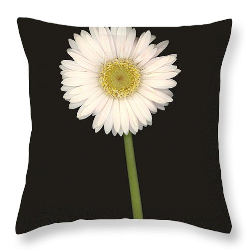 Gerbera Daisy Throw Pillow featuring the photograph White Gerbera Series I by Suzanne Gaff
