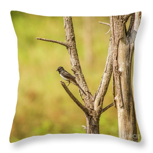 Wildlife Throw Pillow featuring the photograph Willie Wagtail Woodland by Jorgo Photography - Wall Art Gallery