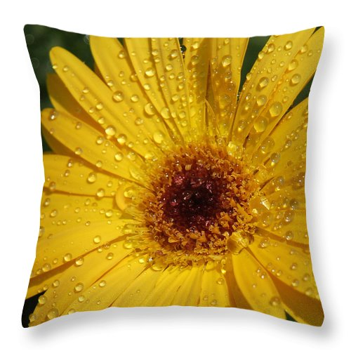 Yellow Throw Pillow featuring the photograph Yellow Gerbera by Suzanne Gaff