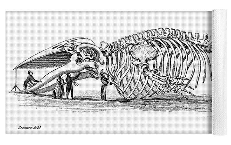 Baleen Whale Skeleton Yoga Mat For Sale By Granger