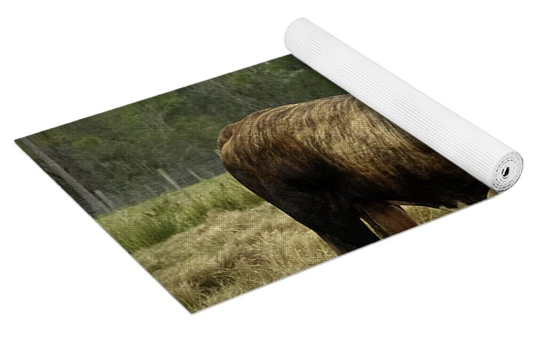 Florida Cracker Cows #4 Yoga Mat