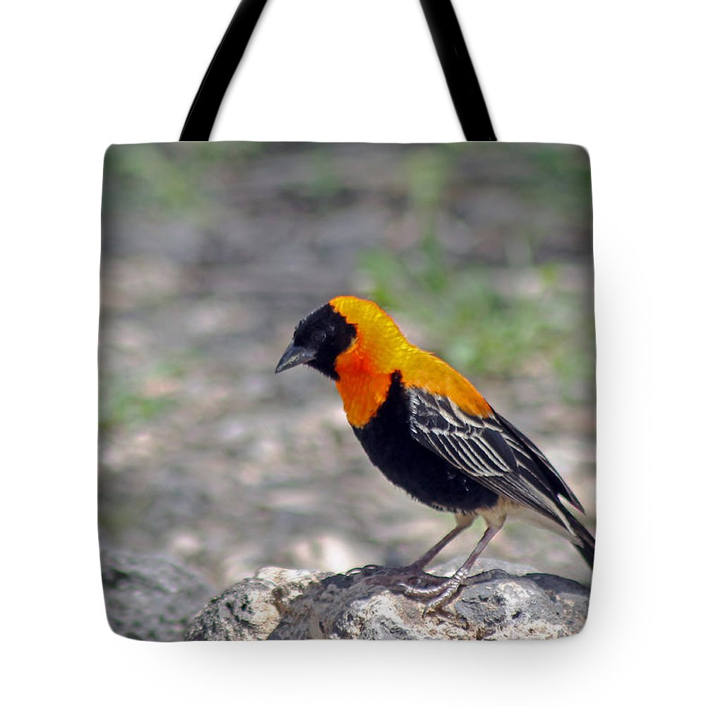 Black Bishop Tote Bag featuring the photograph Black Bishop Weaver by Tony Murtagh