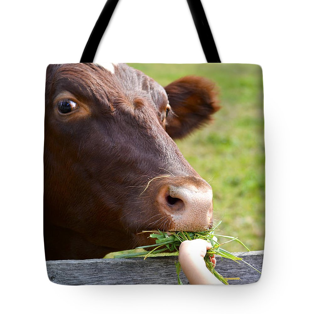 Cow Tote Bag featuring the photograph Childs Helping Hand by Julie Palencia