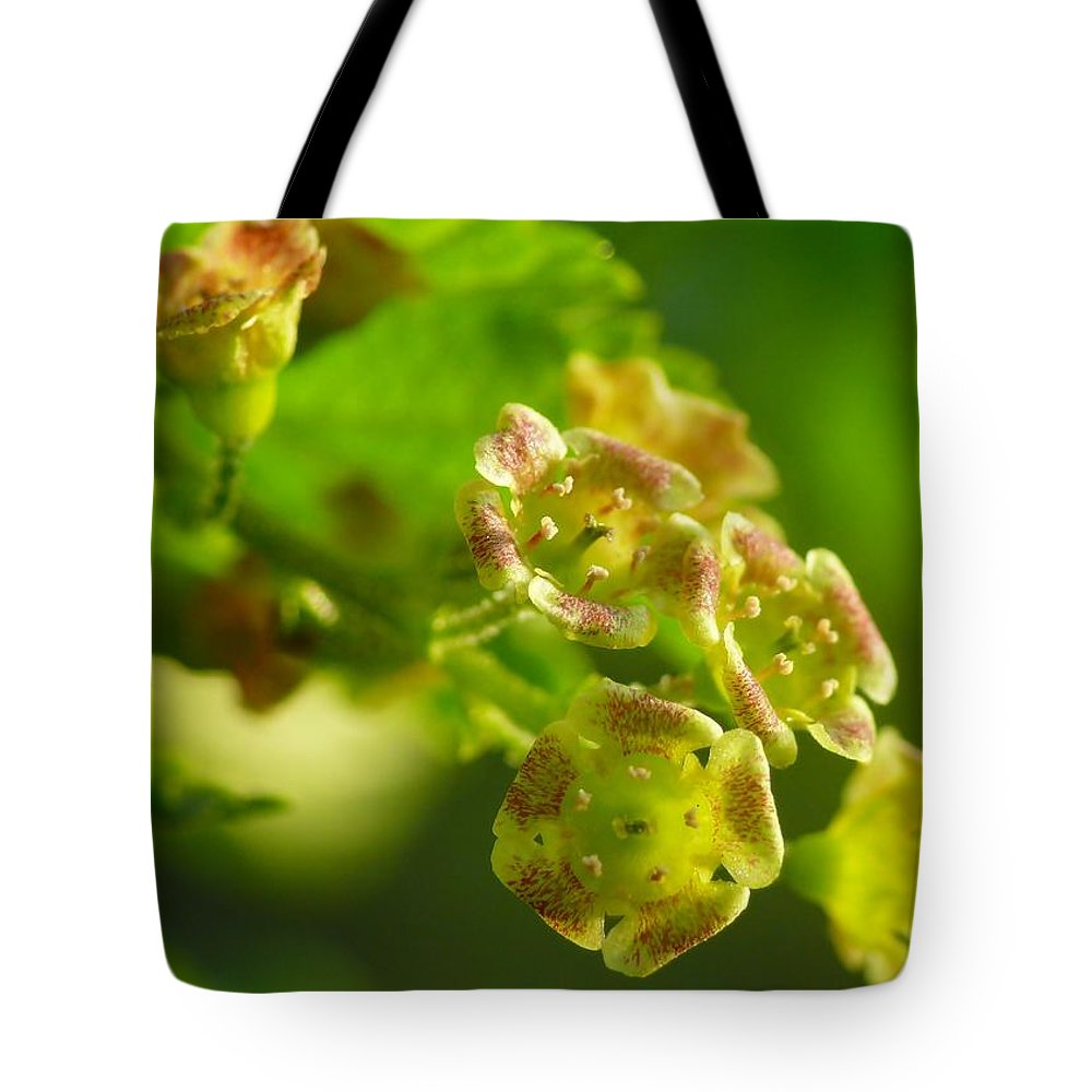 Photo Images Tote Bag featuring the photograph Currant In Bloom by Gabi Siebenhuehner