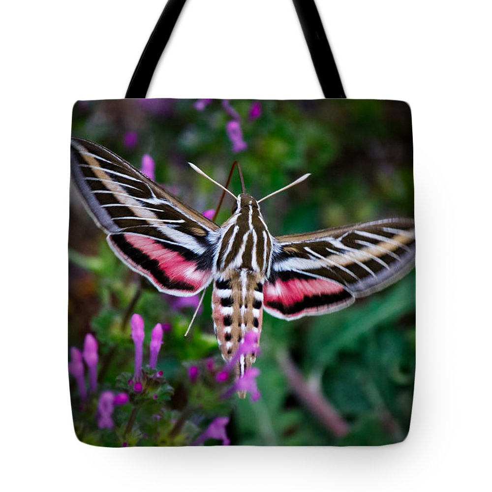 White-lined Sphinx Tote Bag featuring the photograph Hummingbird Moth Print by Doug Long