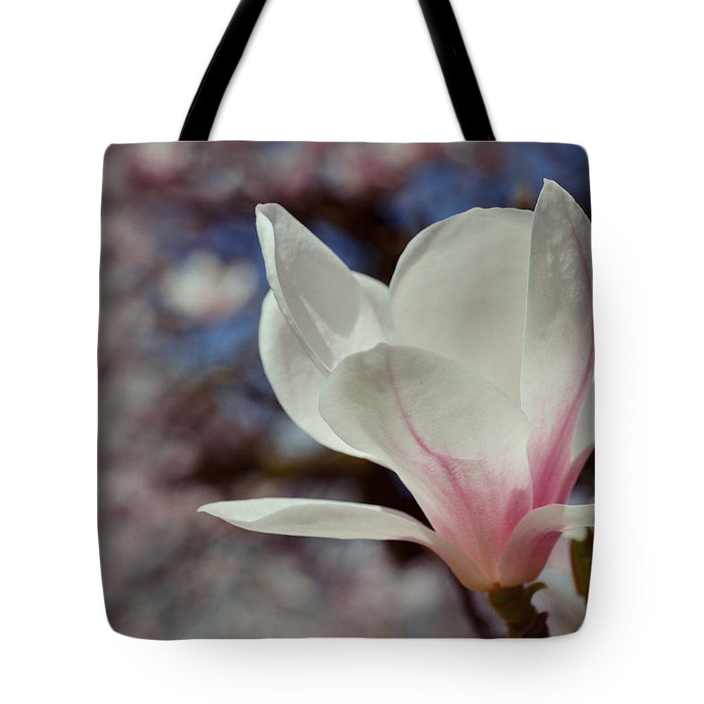 Background Tote Bag featuring the photograph Magnolia Flowers In Spring Time by TouTouke A Y