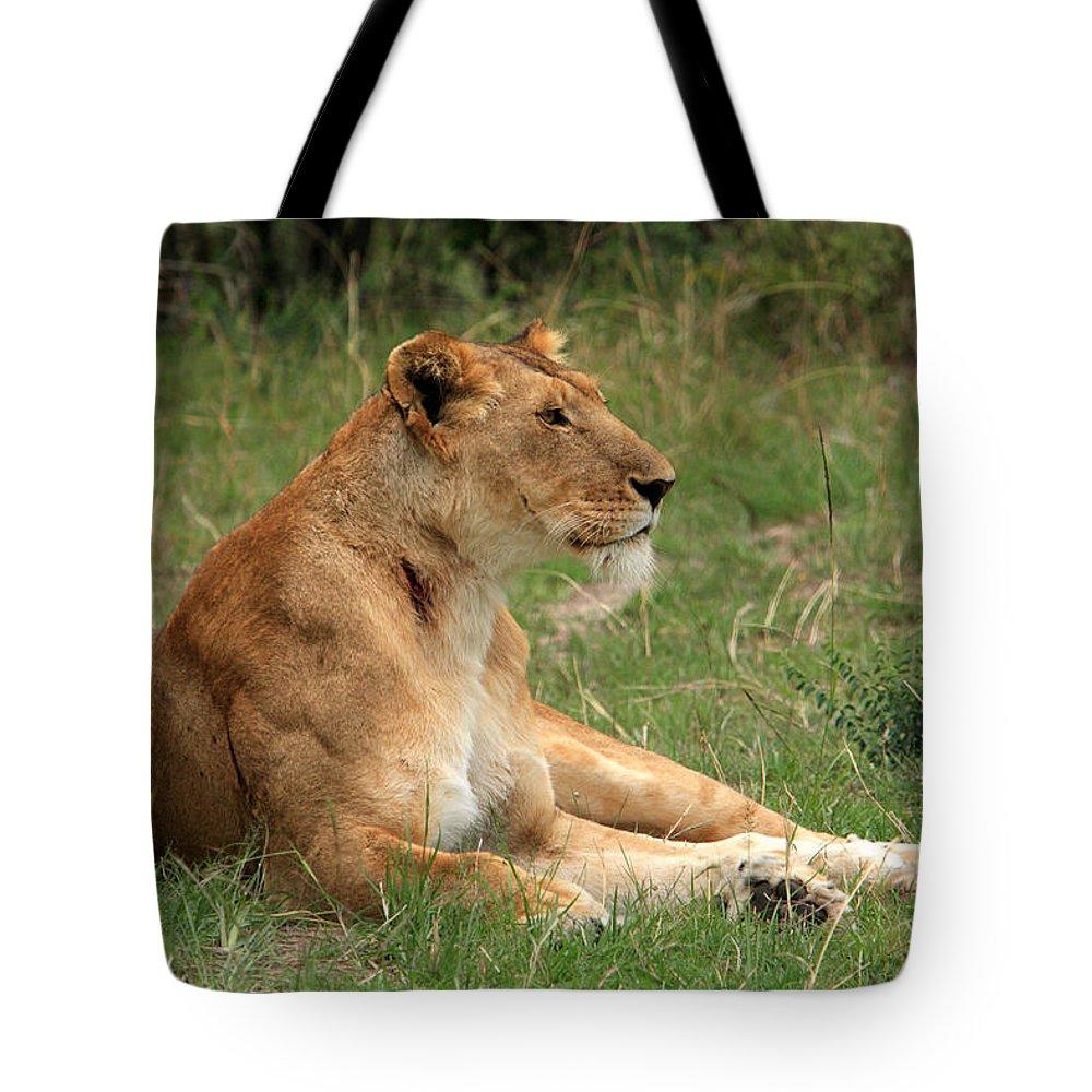 Lion Tote Bag featuring the photograph Masai Mara Lioness by Aidan Moran