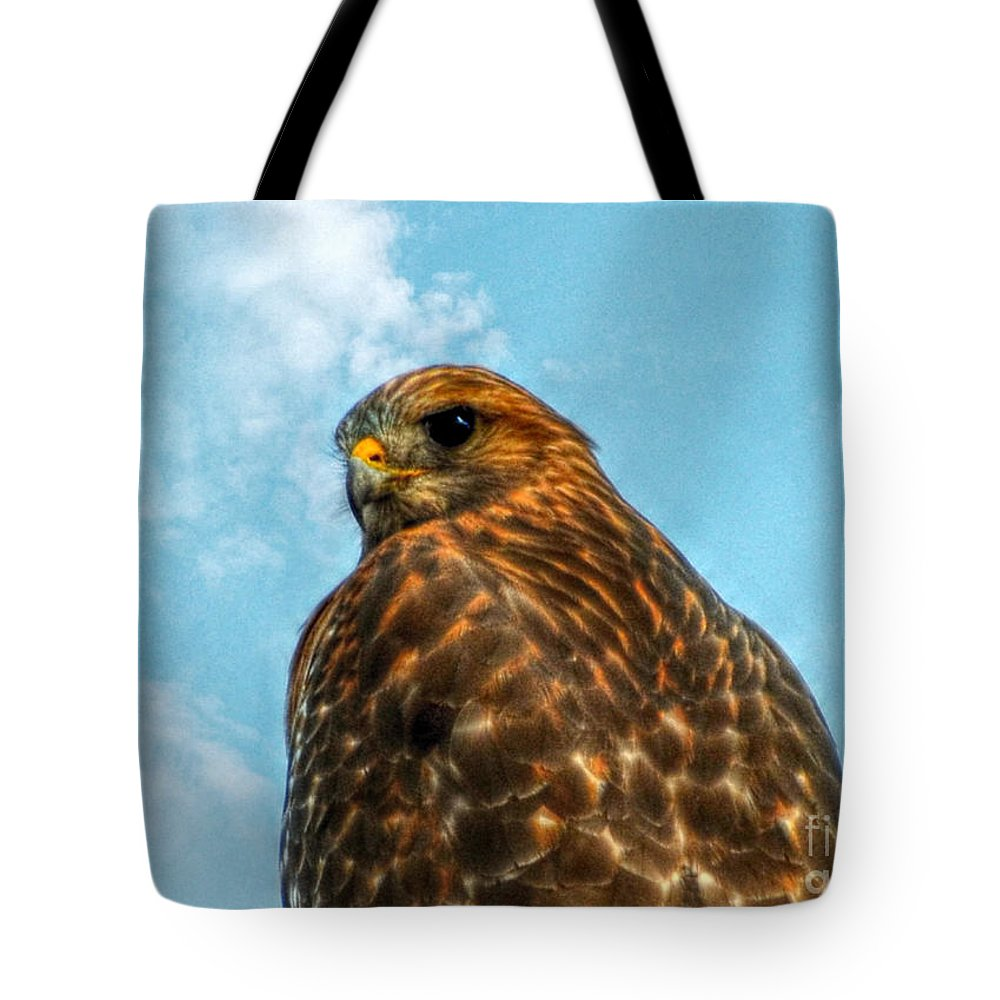 Landscape Tote Bag featuring the photograph What Are You Looking At Red Shoulder Hawk by Peggy Franz